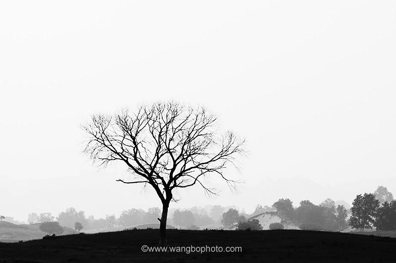 坝上●草原风情画 - 一镜收江南 - 清韵