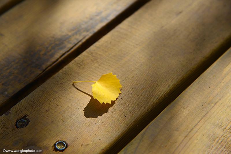 千年不息的生命:额济纳旗金色胡杨林 - 一镜收江南 - 清韵