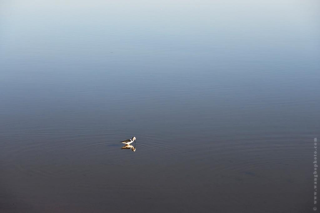 悉尼美景 - 一镜收江南 - 清韵