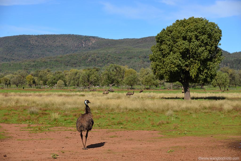 探寻新州内陆之美 -- 澳洲内陆小镇Narrabri游记 - 一镜收江南 - 清韵
