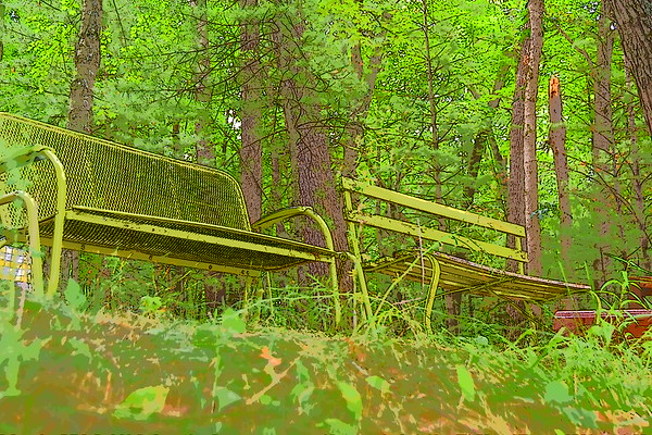 picture of empty benches in the woods