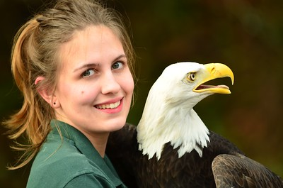 Bald Eagle - love this pic.  She was outside for this one about to put the eagle back into their mobile trailer.
