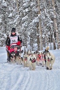 Karen Ramstead with her team of purebred Siberians