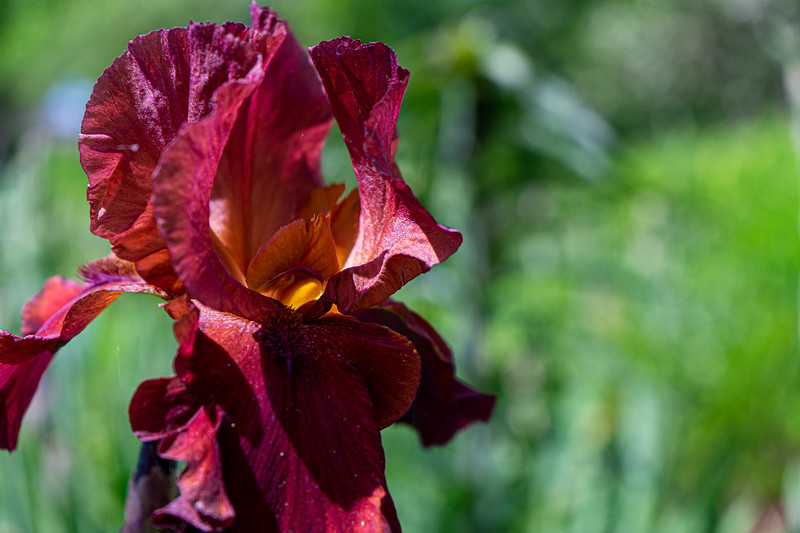 Gibson Park Flowers