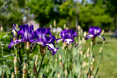 Gibson Park Flowers