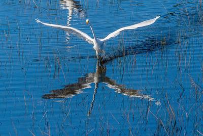 Graceful bird nice reflection