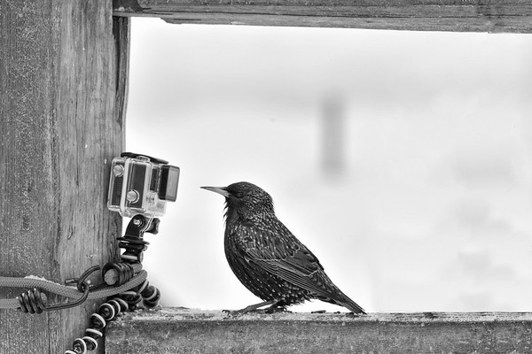 Love having pic taken #Starling selfie