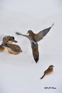 Coming in for snowy landing
