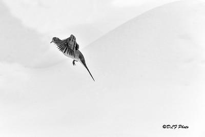 Graceful flying
