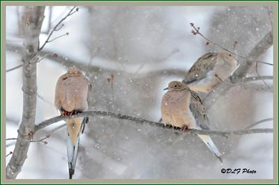 Tough winter