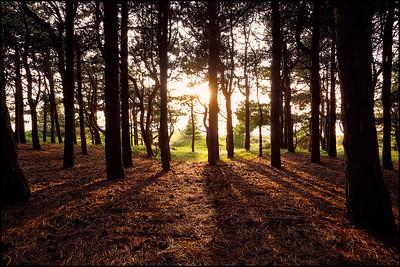Zonsondergang in het bos [#026]