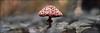 Zwam | Fungus