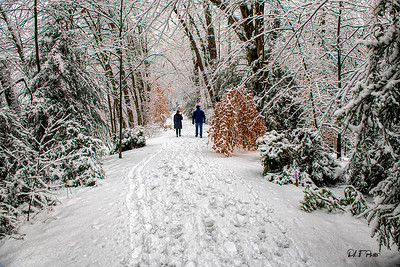 Walking in the snow wonderland