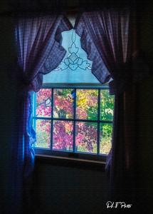 Fall scene through the window