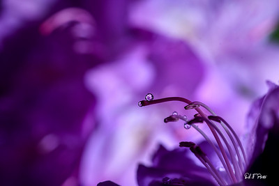 Deep purple with reflections