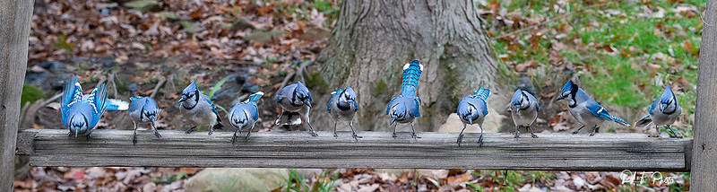 Blue Jay line up