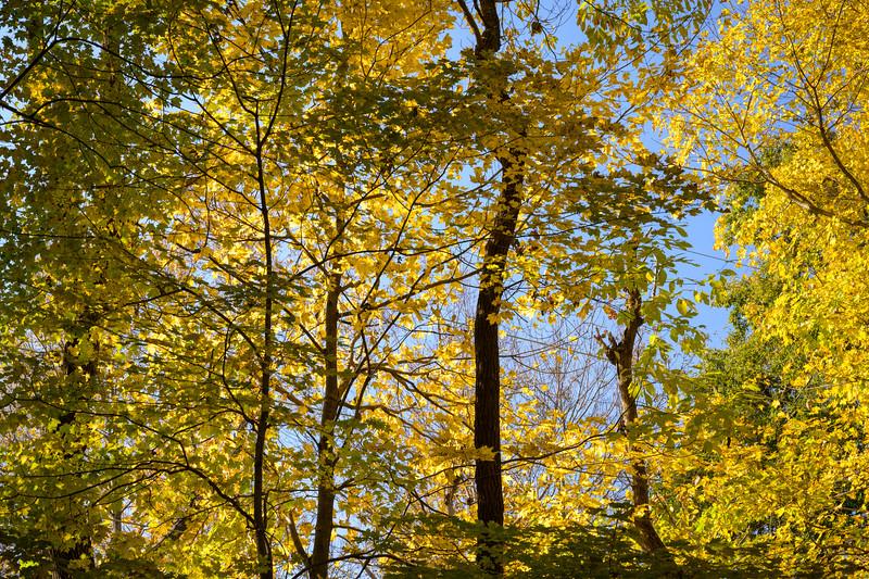 Autumn Yellows :-)