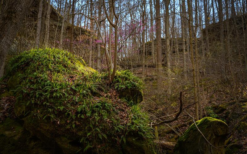 The fern rock :-)