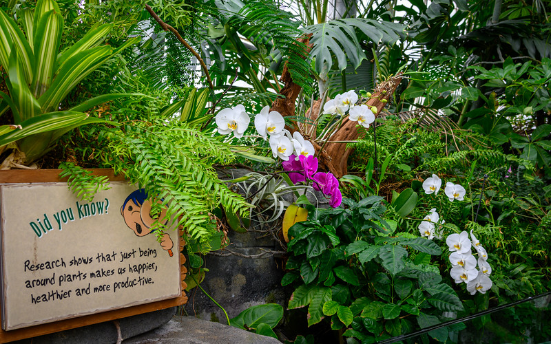 Regarding the sign, yes...I do feel better when surrounded by plants :-)