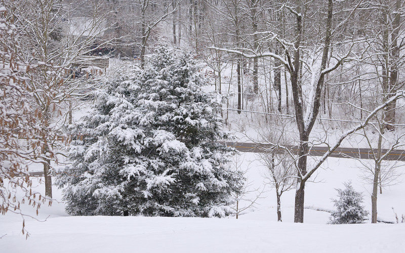 I'm getting tired of the snow (but it's pretty) :)