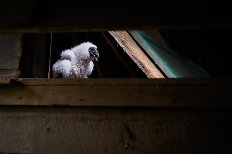 Peek-a-boo.  I see you :-)