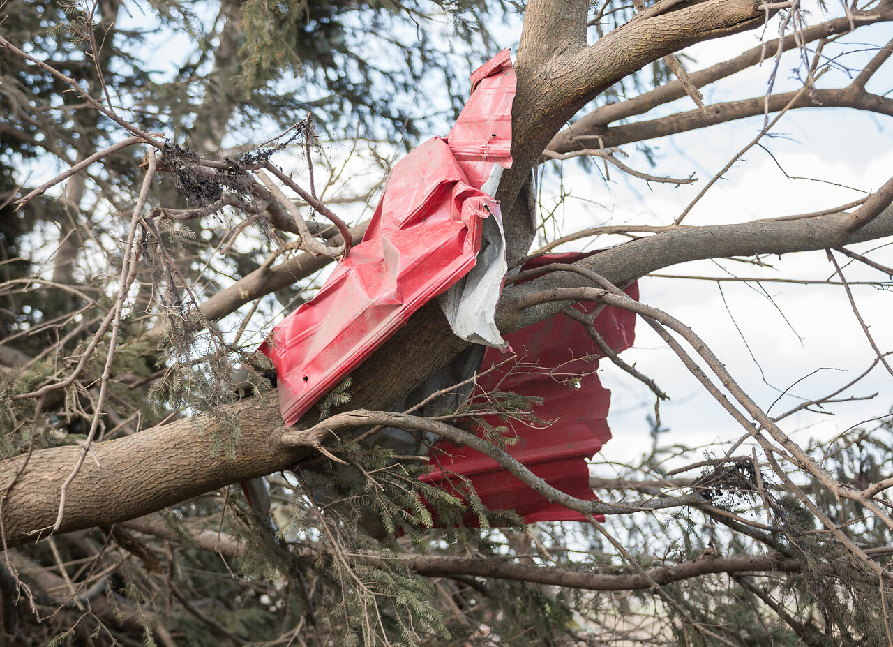 A piece of metal is wrapped around a tree limb, caused the wind from the tornado.