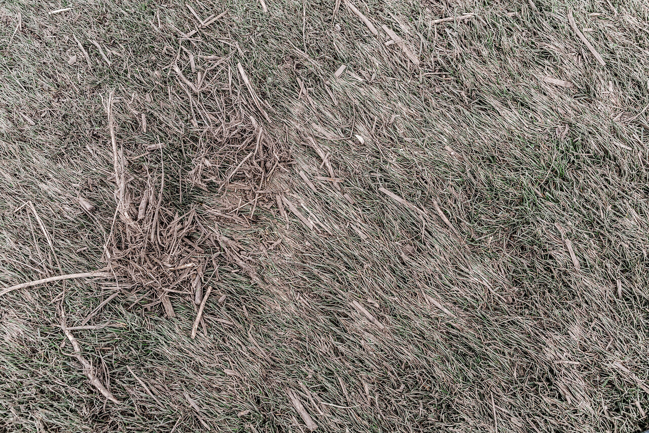 The grass is visibly blown to the side and stuck by the mud from the winds of the tornado.