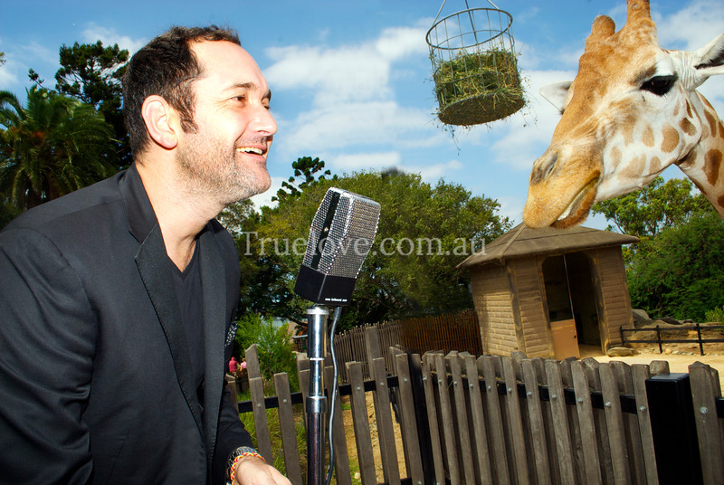 """31.1.2013<br /> <br /> Australian runner-up of 'The Voice', singer Darren Percival. At Taronga Zoo with the giraffes, to promote his forthcoming concert for the Twilight at Taronga zoo series which I love working for - always a great mix of celebrities and animals!<br /> <br /> <a href=""""https://www.facebook.com/twilightattaronga"""">https://www.facebook.com/twilightattaronga</a><br /> <br /> © Tess Peni"""