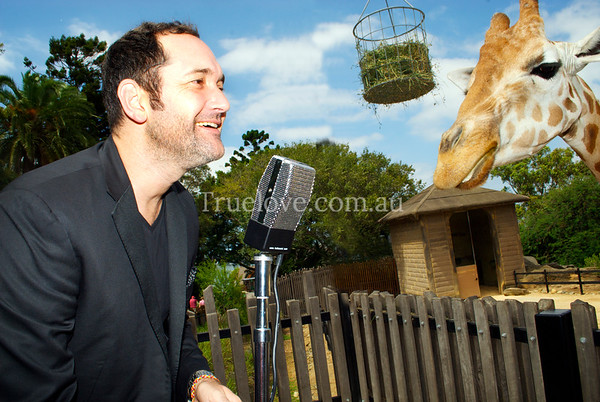 31.1.2013  Australian runner-up of 'The Voice', singer Darren Percival. At Taronga Zoo with the giraffes, to promote his forthcoming concert for the Twilight at Taronga zoo series which I love working for - always a great mix of celebrities and animals!  https://www.facebook.com/twilightattaronga  © Tess Peni