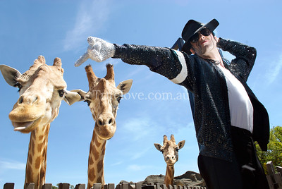 "20.10.2012  ""Man in the Mirror"" Paul Rizzo, an Australian Michael Jackson impersonator, will perform next March 8th, 2013 for 'Twilight at Taronga' zoo concert series. © Tess Peni"