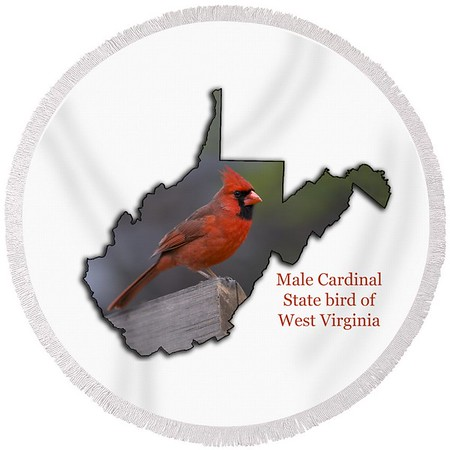 male-cardinal-state-bird-of-west-virginia-daniel-friend-transparent (1)