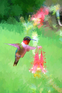 Ruby-throated Hummingbird  ........ paintography