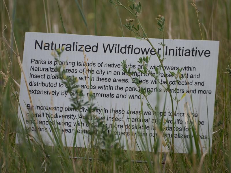 Wildflowers in Heritage Park