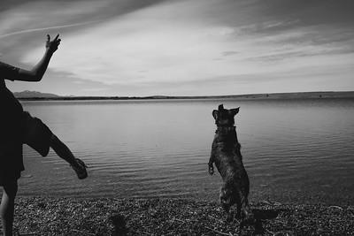 Lake Dog