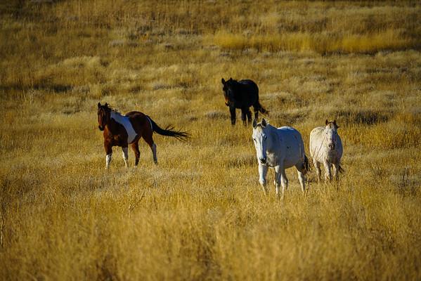 Freezout Horses