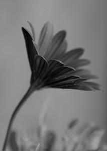 Margeritt