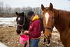 Stillwater, MN - Steve & Dorothy Erban of Premiere Stallions of Minnesota, owners of Kela, on their farm near the Twin Cities. Steve Erban with Gentle Kela, right (Chestnut) and Gentle Princess, dam of Tubby Time, left (dark with star) here today, Wednesday March 12, 2014.  Photo by © Todd Buchanan 2014 Technical Questions: todd@toddbuchanan.com