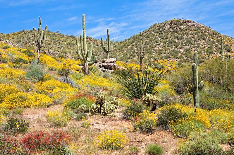4054 Blooming Desert
