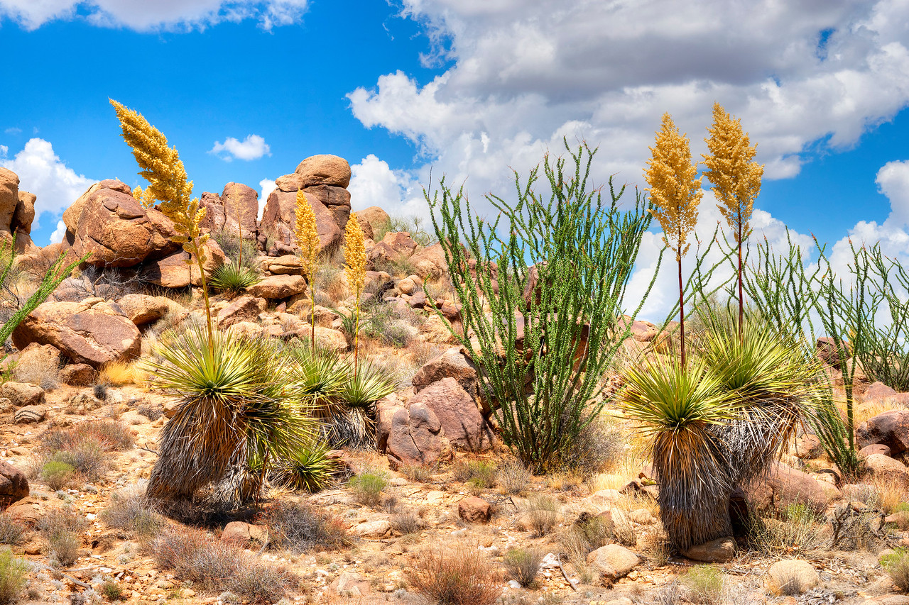4251 Yucca