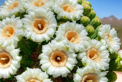 2358 Saguaro