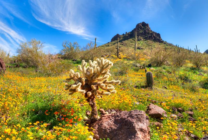 4230 Picacho Peak State Park