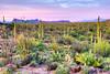 1861 Sonoran Desert