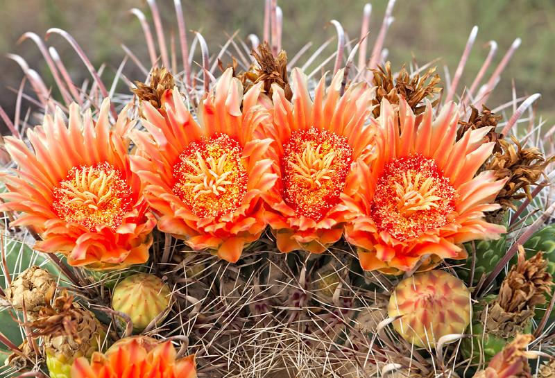 5291 Flower