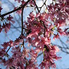 Flowering Trees Make Me Smile