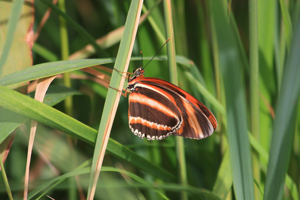Brown and Orange Butterfly in Tall Grass