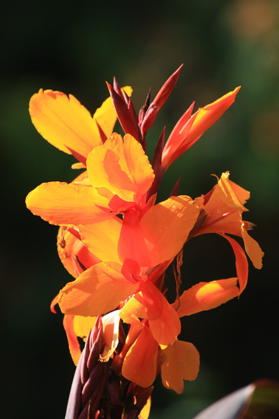 Upright Orange Flower