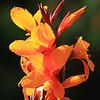 Upright Orange Flower