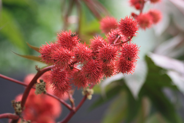 Red Prickly Flowers