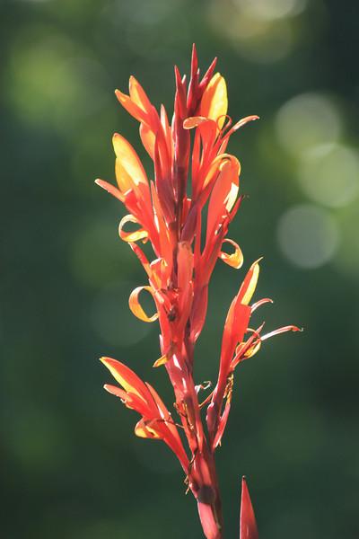 Tall Orange Flower