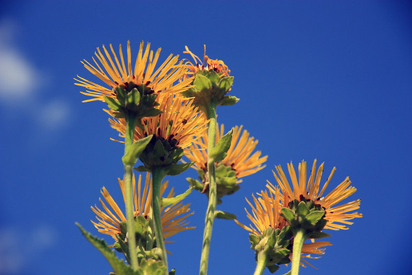 Yellow Flowers Against Blue Sky